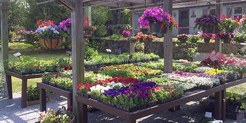 Del Vacchio Garden Center